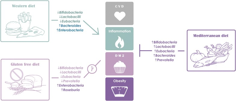 Gut microbiota health weight loss