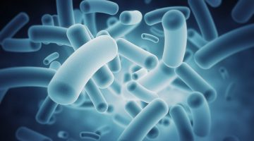 Gut microbes body weight